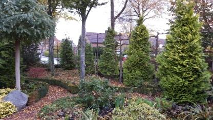 In de zijtuin ook enorme coniferen, en 2 enorm grote haagbeuken.