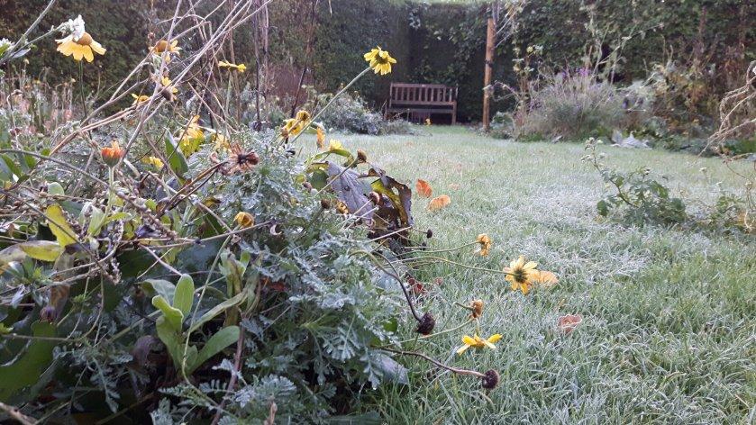 rijp op het gras en de planten