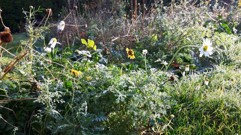 bloemenweide in november