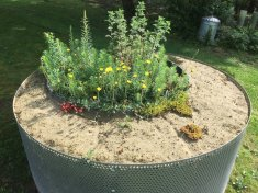 Sand planter - copyright Grassroof Company