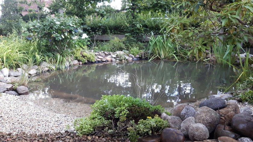 Een natuurlijke vijver aanleggen hoe doe je dat best groen for Natuurlijke vijver maken