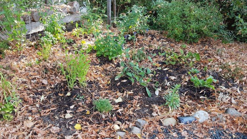 compost om de planten, zo blijft de bodem vochtig