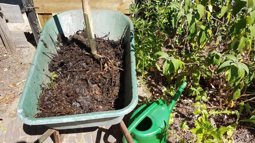 Compost aanbrengen bij een vlinderstruik