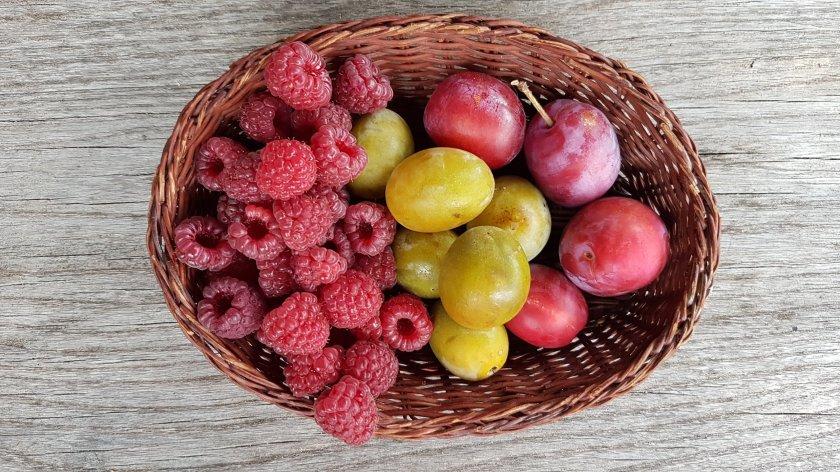 Frambozen en pruimen, een flinke portie